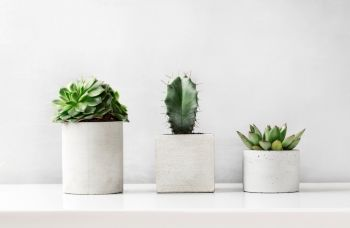 How to combine concrete accents with plants?