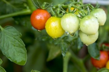 Top vegetable growing tips for July