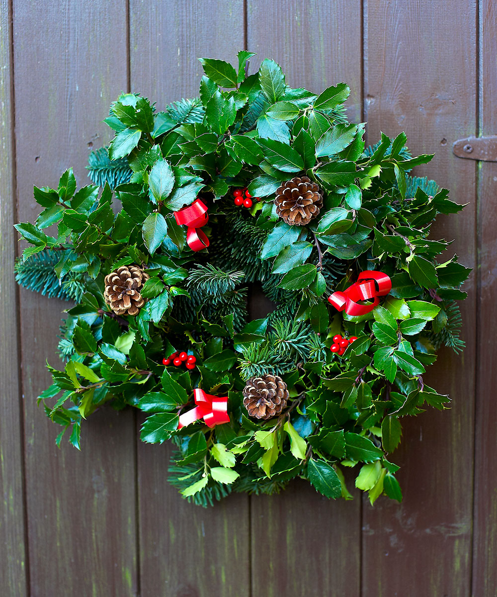 Fresh holly wreath cones