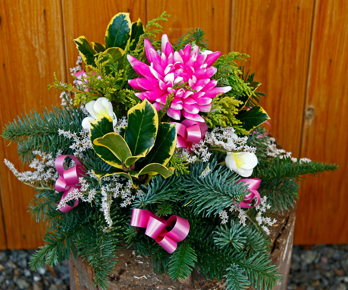 Christmas Posie Pink Dahlia Lyonshall Nry