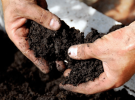 Compost & Growing media