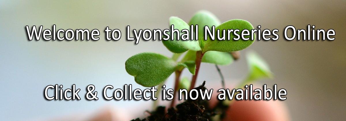 Lyonshall nurseries shop online